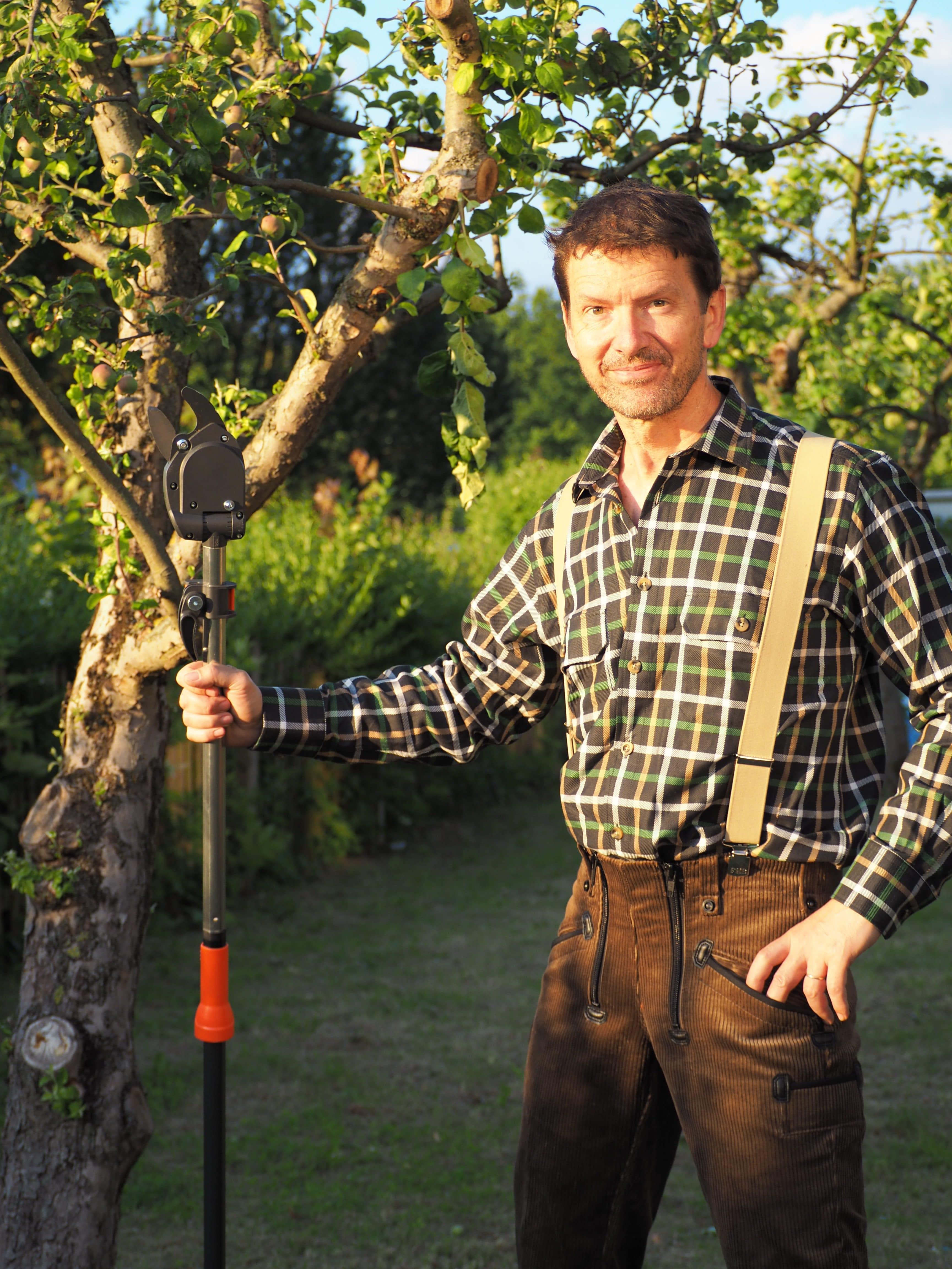 Sommerschnitt bei Süßkirsche, Arbeiten in mittlerer und großer Höhe in Baumkronen